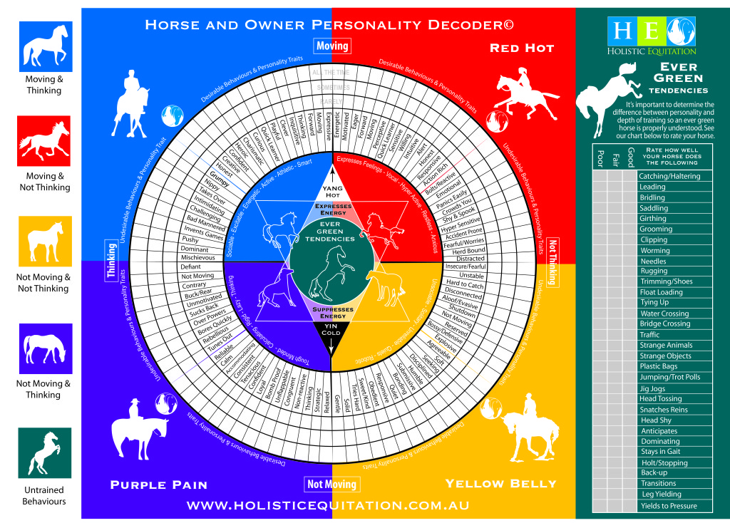 equine-decoder